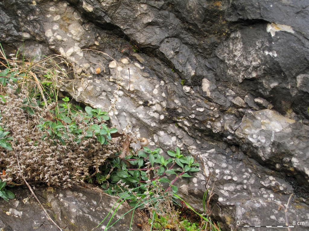 Pequeño biostromo de corales tabulados ramificados (género Thamnopora) y bifoliares (género Platyaxum) en las calizas de la Formación Portilla.