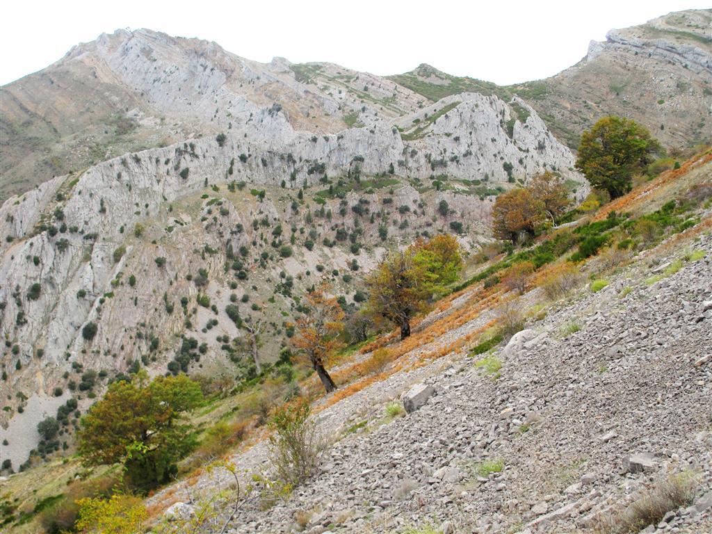 Panorámica de la ladera occidental del pico Moro y de Peña Rionda, al norte de la localidad de Aleje. Uno de los mayores valores naturales de este sector de la cordillera Cantábrica viene dado por su vegetación, ya que aquí se conservan (e incluso prosperan) varios sabinares relictos que comparten las laderas de solana con encinares y bosquetes de quejigos. Uno de estos sabinares, ubicado en la cercana localidad de Crémenes, posee un elevadísimo valor científico y natural, y goza de una figura específica de protección, (se trata de una de las cinco Zonas de Reserva del Parque Regional de Los Picos de Europa).