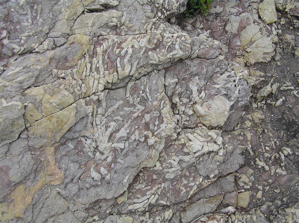 Primeros niveles con fauna propiamente arrecifal (color marrón en la columna C-CA003-01), correspondientes a la etapa de colonización (ver E-CA003-01) del desarrollo arrecifal.