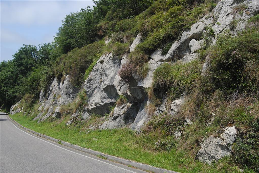Calizas bioclásticas grises de la parte superior de la Fm Puentellés (Kasimoviense Medio)
