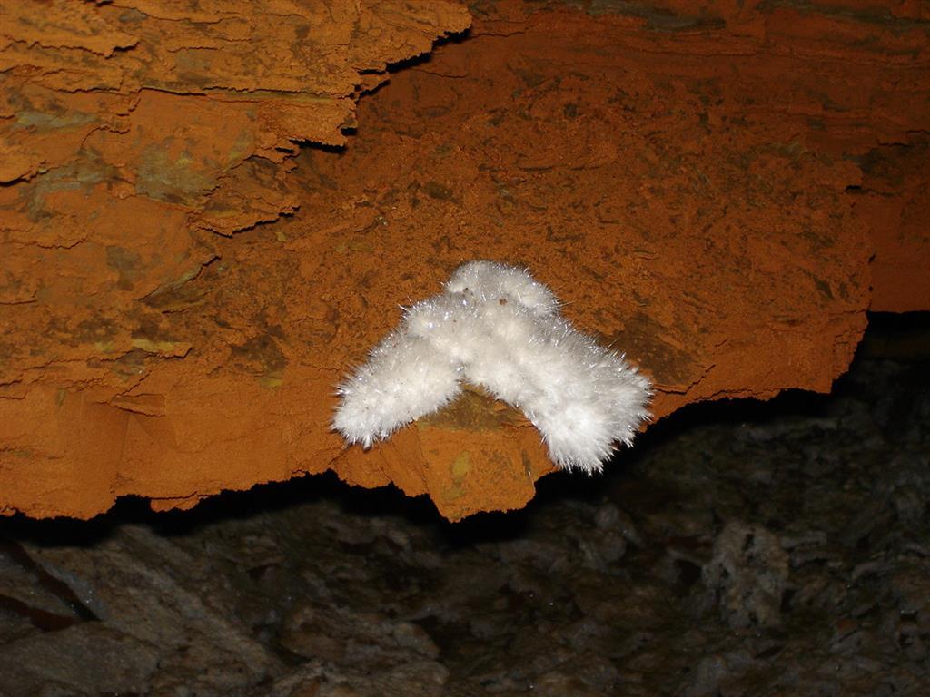 Formas fibrosas. Son los espeleotemas más característicos de la cueva de Castañar y unos de los más abundantes. Se trata de cristales aciculares de aragonito, aunque localmente pueden haberse transformado en calcita.