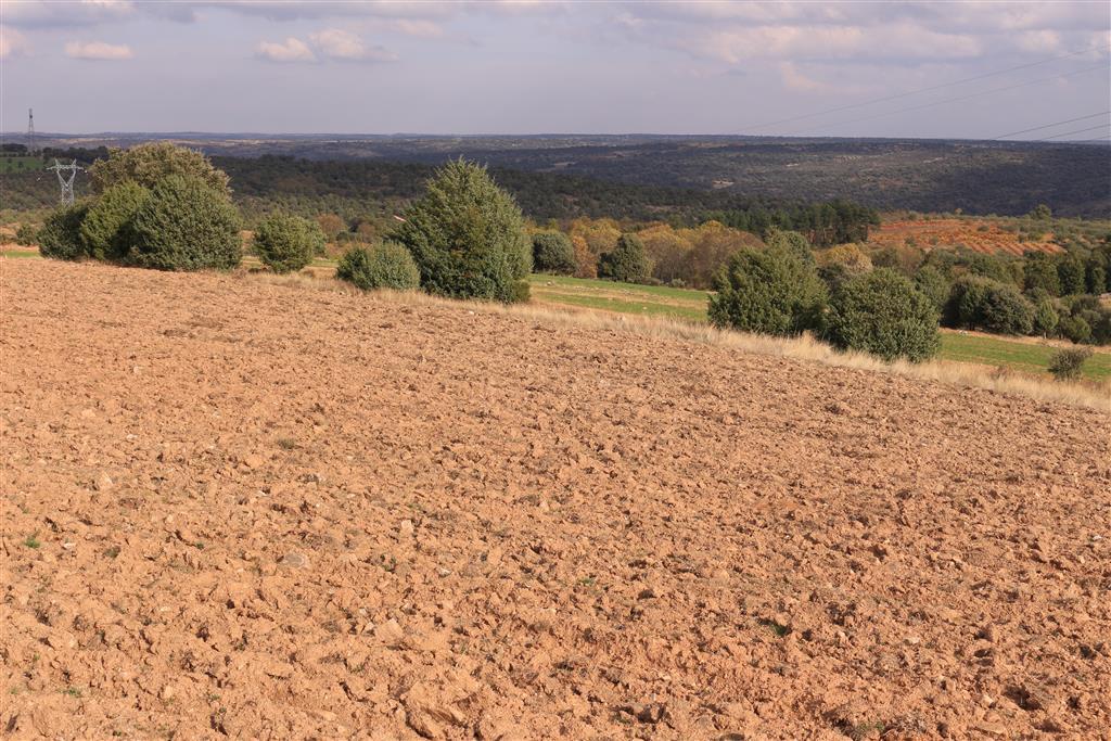 La penillanura zamorana labrada sobre el territorio granítico de Sayago. Las Arribes, débilmente insinuadas en la fotografía, inciden fuertemente en ella.