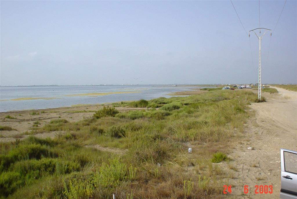 Abanicos de desbordamiento y depósitos de marjal en la orilla interna de la flecha de Trabucador (Bahía de Los Alfaques).
