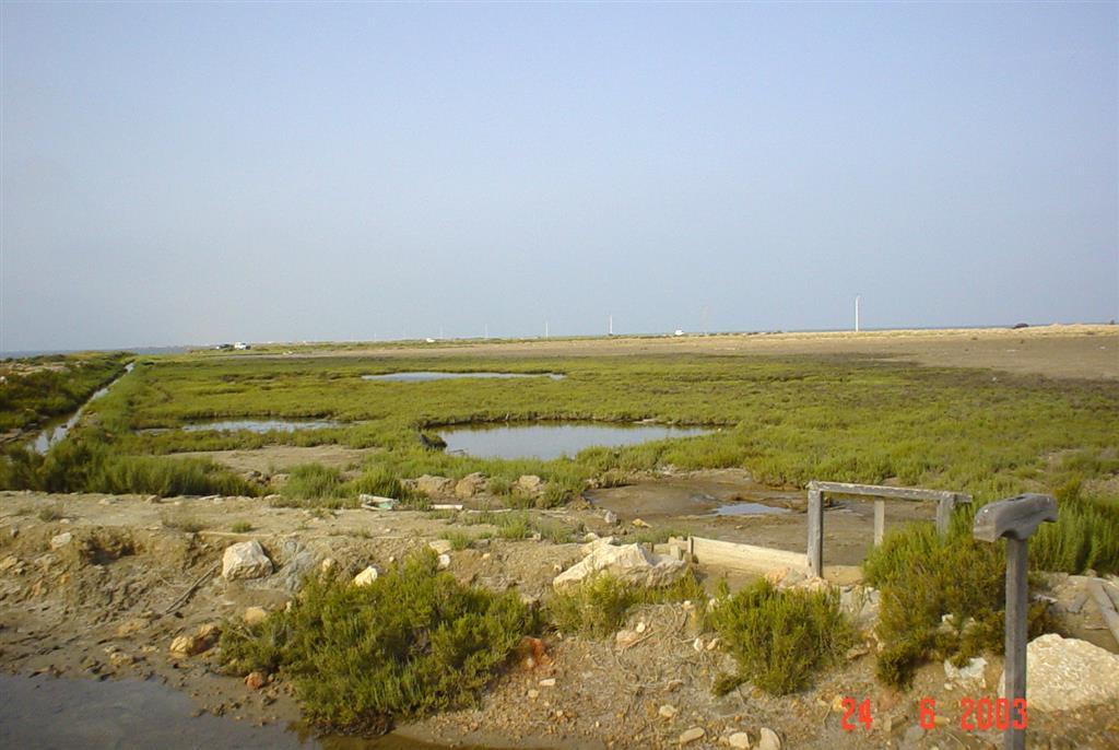 Salina abandonada totalmente colmatada por sedimentos y colonizada por vegetación halófita. Península de La Banya.