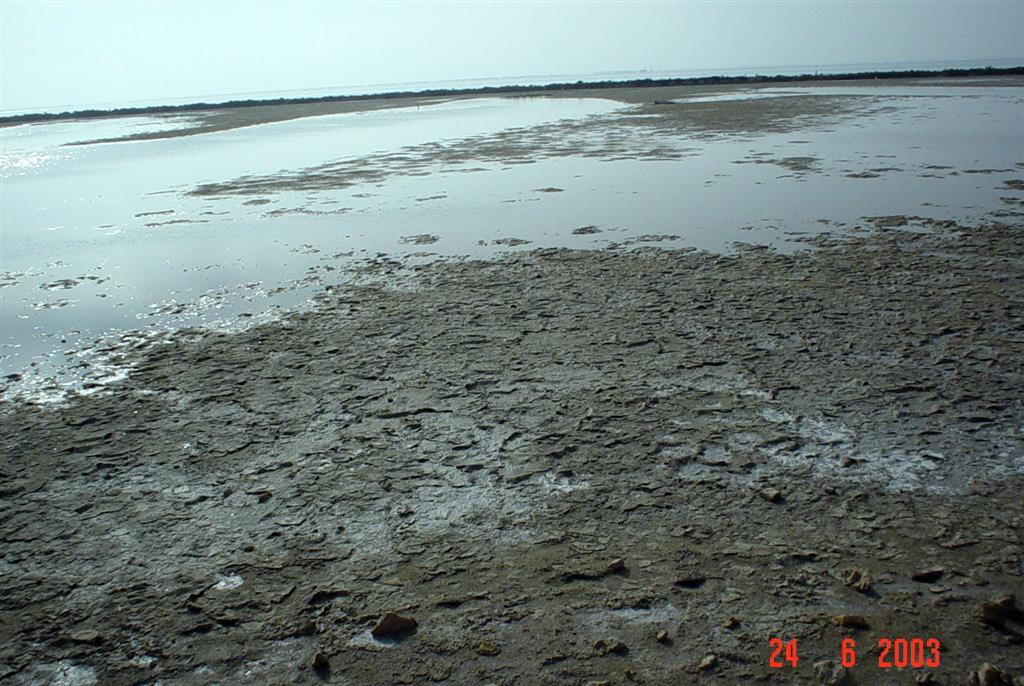 Depósitos litoral de marjal en el extremo meridional de la flecha de Trabucador.
