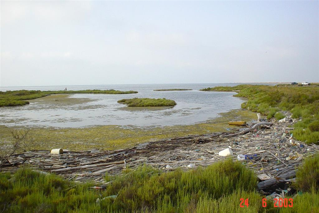 Acumulación de residuos flotantes entre depósitos litorales de marjal en la Ensenada de Los Alfaques. Extremo meridional de la flecha de Trabucador.
