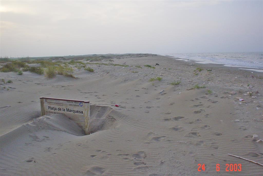 Acumulación eólica activa en playa de la Marquesa (Península del Fangar). El rápido crecimiento vertical del depósito eólico está ligado al proceso de estrechamiento y apuntamiento del cuerpo arenoso de la flecha del Fangar.