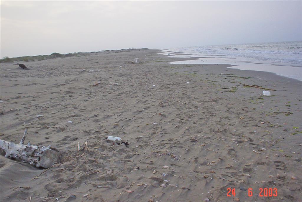 Desarrollo de cúspides en la playa expuesta de la Marquesa (Península del Fangar).