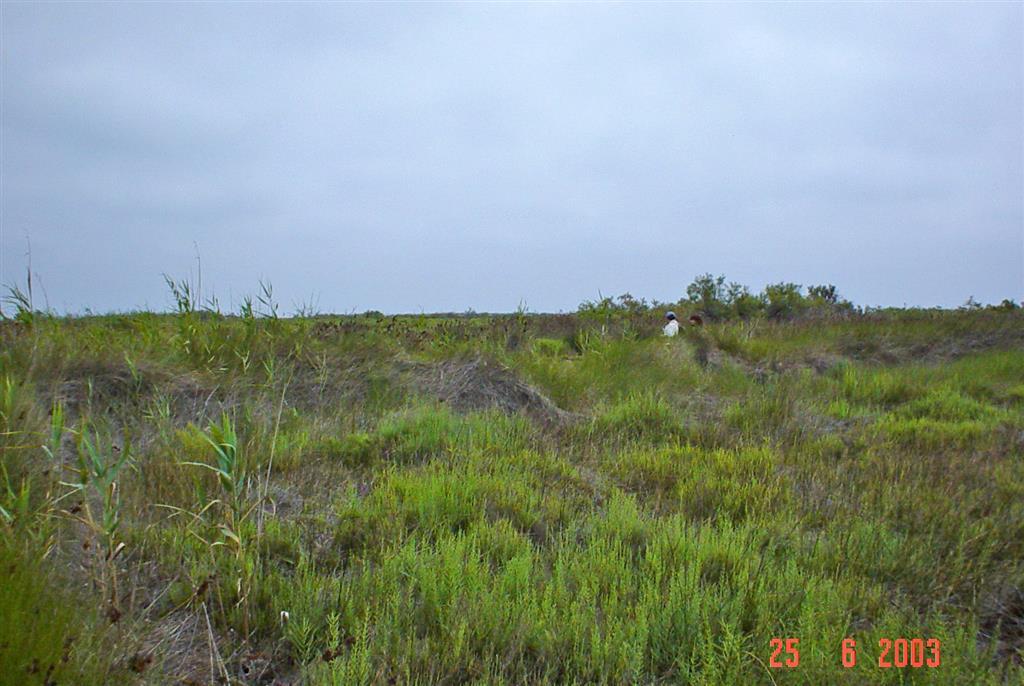 Vista general de la llanura deltaica con vegetación. Isla de San Antonio.