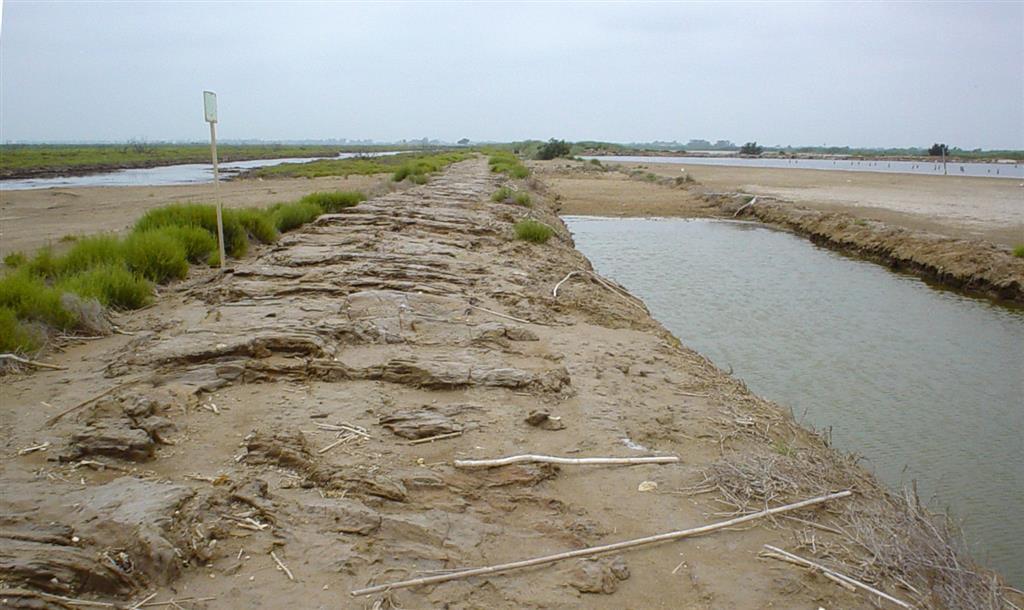 Restos de antiguas instalaciones pesqueras y salineras en la llanura deltaica (Isla de San Antonio, zona de Reserva Integral).