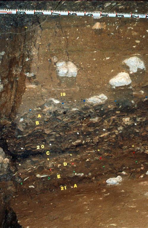 Dertalle de otra sección estratigráfica que muestra los niveles 19, 20 y 21 de la secuencia de El Castillo cuyo contenido corresponde a los restos de ocupaciones de poblaciones de neandertales (foto Federico Bernaldo de Quirós)