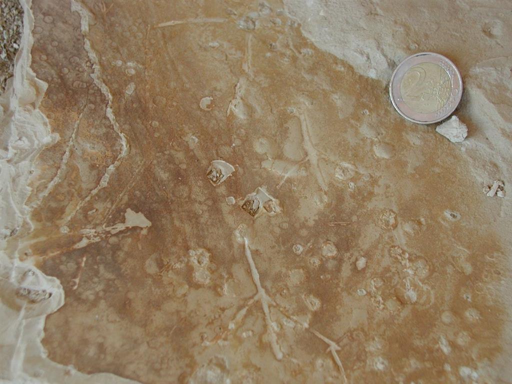 Huellas de aves (birdprints) y de gotas de lluvia (rainprints) en los limos (lagoon) por encima de las facies playa (Miembro Sorbas)
