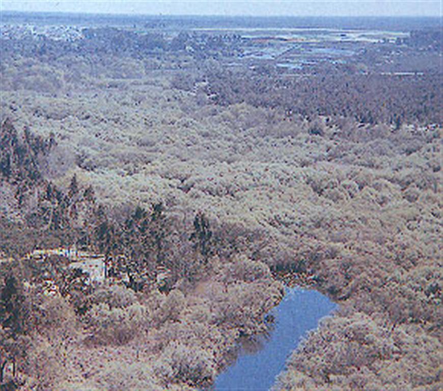 Vista aérea oblicua de las marismas altas con vegetación