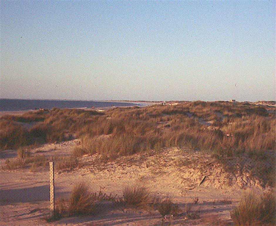 Dunas costeras: segundo cordón, fijado por vegetación natural