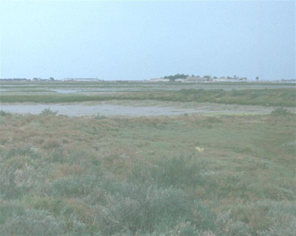 """Vista marismas Bahía de Cádiz, prox.""""Coto de la Isleta"""" (Chiclana).Nivel bajo sin vegetación, inundable, nivel más alto con vegetación halófita, inundable durante pleamares vivas, y nivel superior con vegetación arbustiva y arbórea, no inundable."""