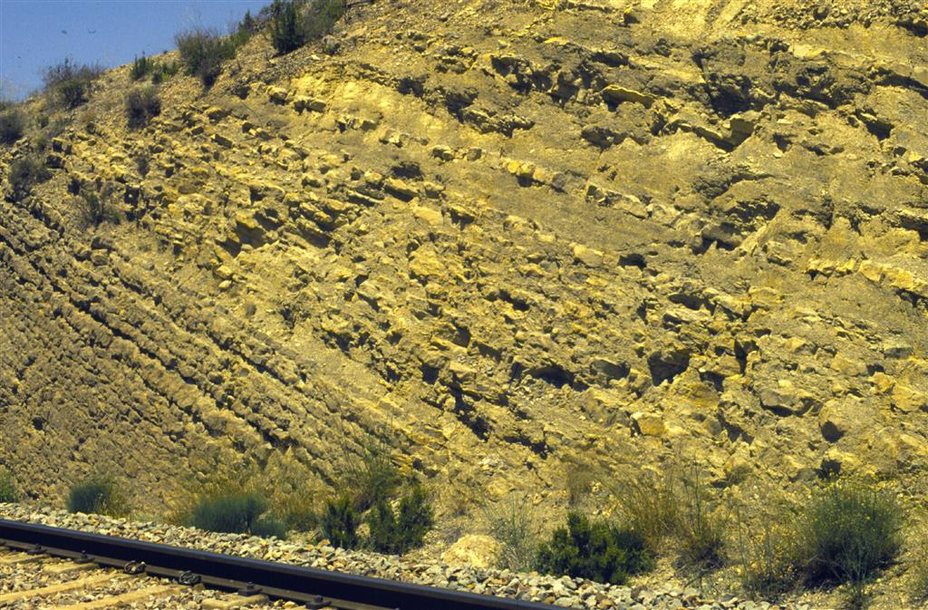 Tránsito entre las calizas bioclásticas de la Fm. Barahona (izquierda) y la alternancia de margas y calizas de la Fm. Turmiel, en la trinchera del ferrocarril de Ricla (Sección del Juncal). El límite entre el Pliensbachiense y el Toarciense está situado ocho niveles por debajo de la primera capa margosa gruesa (Foto J.J. Gómez y A.Goy).