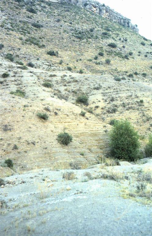 Vista general de los materiales del Toarciense en la sección de Ricla (Camino de las Conchas)