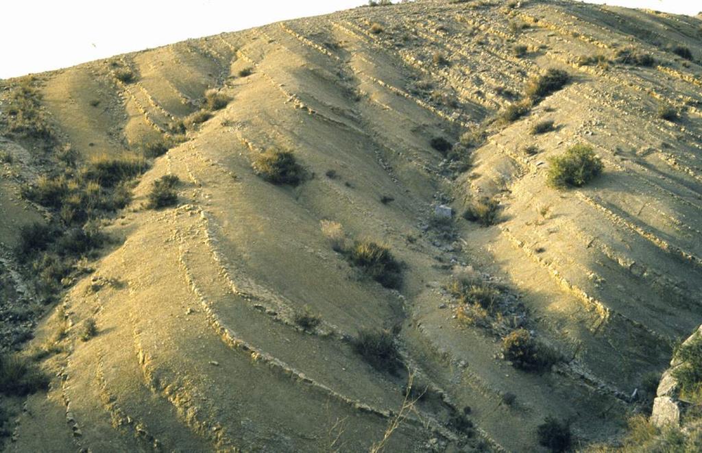 Detalle de la extraordinaria exposición que presentan los ciclos sedimentarios de las zonas Serpentinus y Bifrons en los afloramientos de Ricla (Camino de las Conchas)