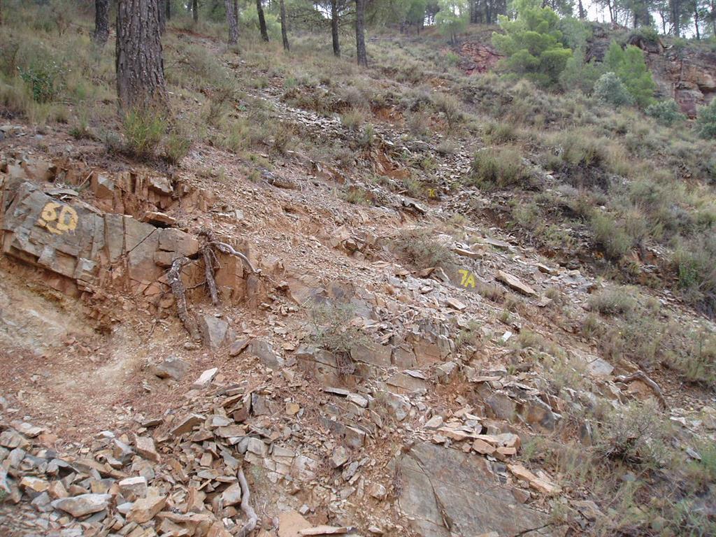 """Lutitas margosas con fósiles del límite Bilbiliense-Leoniense en la Formación Valdemiedes, margen izquierdo de la rambla homónima. En el nivel 6D se documenta el acontecimiento de extinción masiva del Cámbrico Inferior-Medio, que toma el nombre de """"Evento Valdemiedes"""" en alusión a la unidad litoestratigráfica del mismo nombre."""