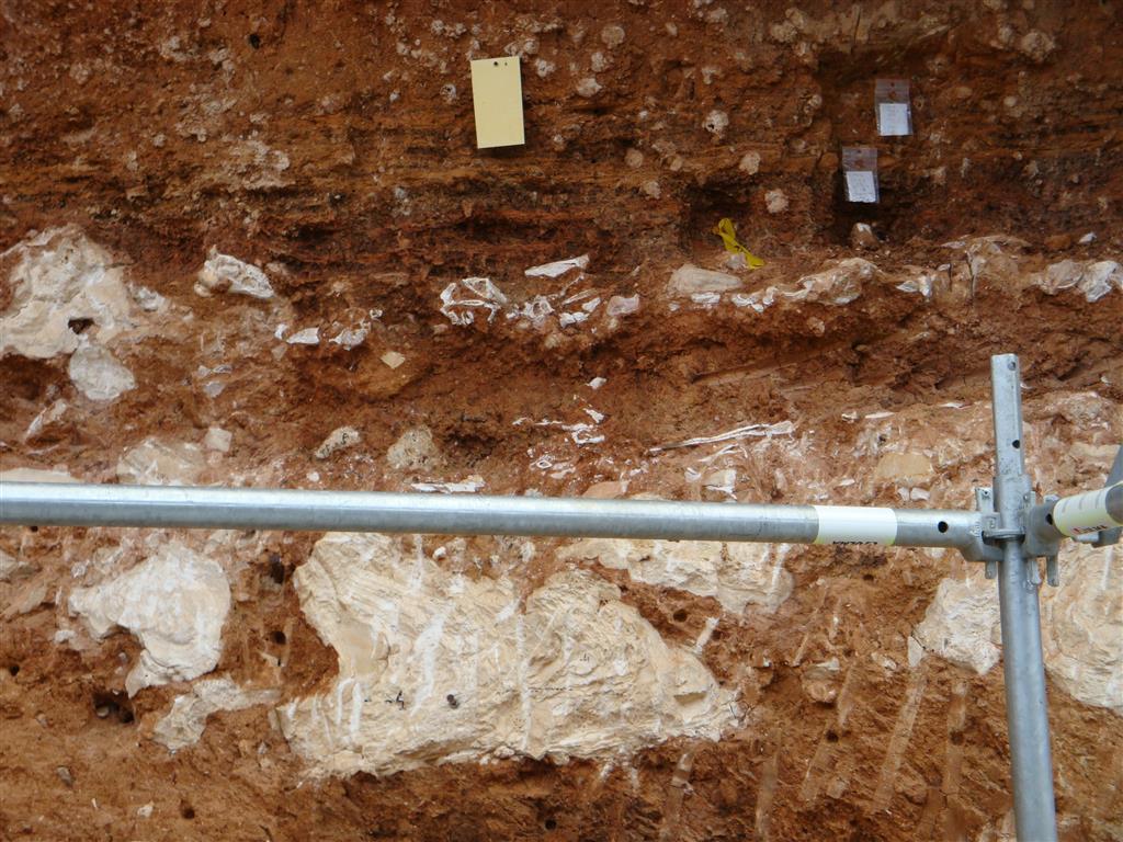 Yacimiento Galería. Nivel sedimentario con espeleotemas caídos y acumulación de huesos por encima. Trinchera del ferrocarril. Atapuerca.