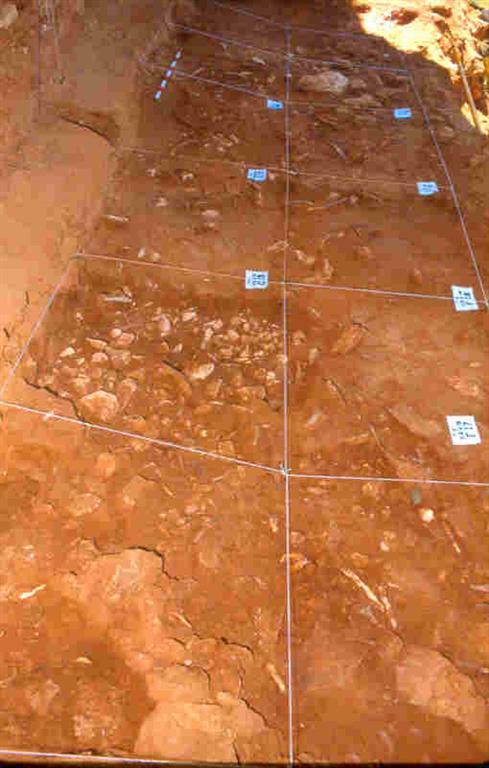 Vista parcial del yacimiento Galería en la trinchera del ferrocarril de la Sierra de Atapuerca, durante los trabajos de montaje de la cuadrícula aérea (foto Equipo Investigador de Atapuerca)