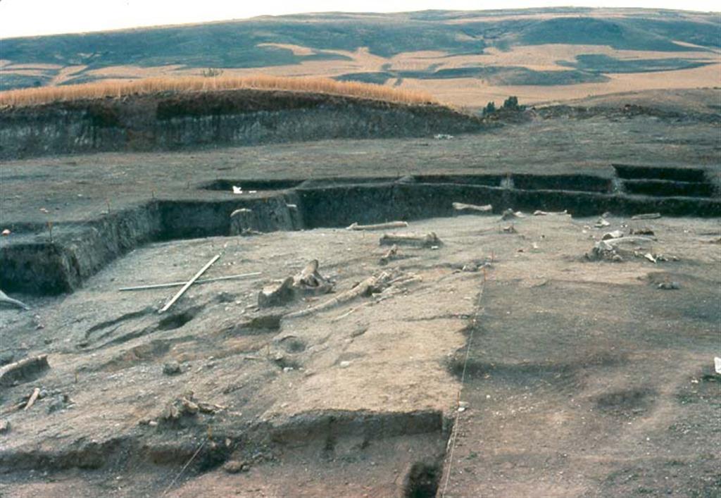 Vista parcial del yacimiento de Ambrona durante las excavaciones de Howell de 1981 (foto L. Gerardo Vega Toscano)