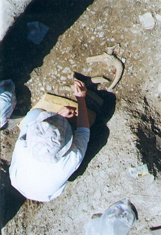 Vista parcial de las excavaciones recientes de M. Santonja y A. Pérez-González en el yacimiento de Ambrona (foto Manuel Santonja)
