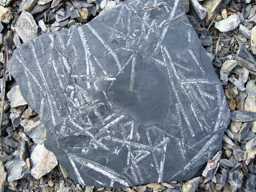 Detalle de algunos ejemplares encontrados en el yacimiento