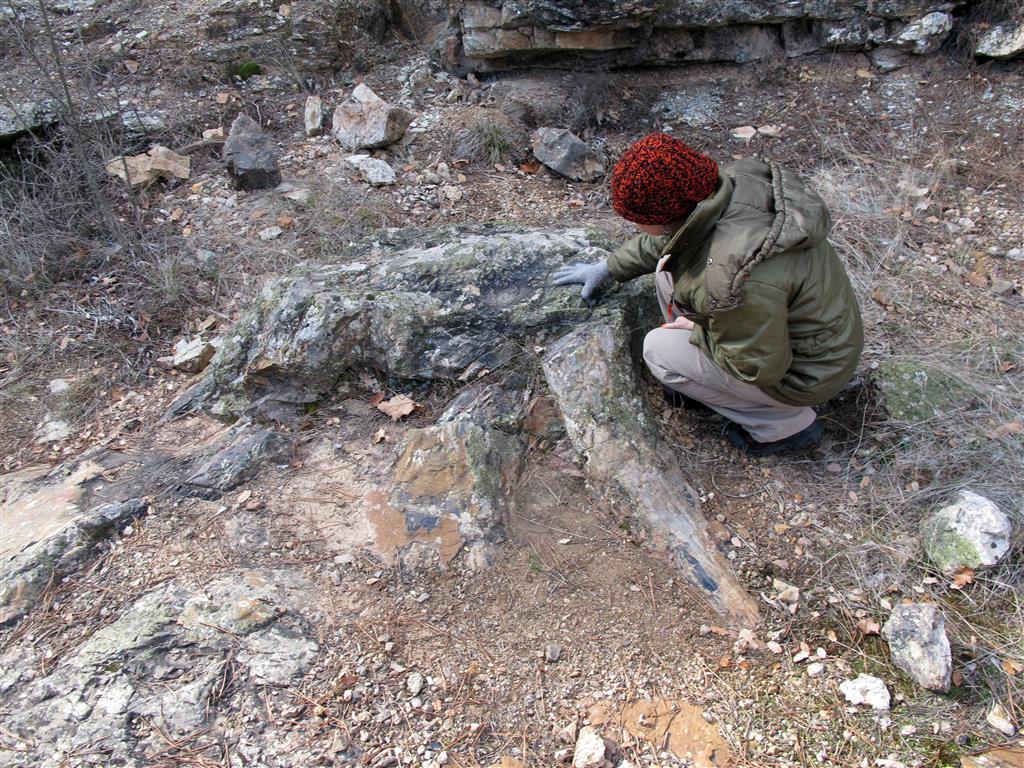 Xilópalo de la base del Pérmico inferior en la Sierra de Aragoncillo