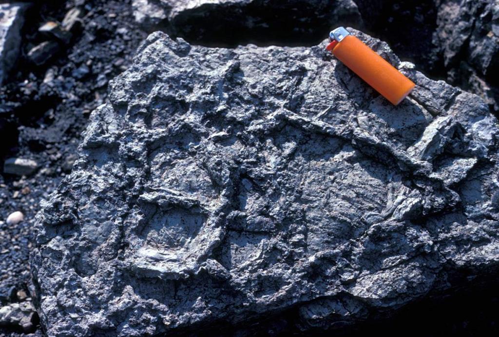 Grietas de desecación en los sedimentos de origen lacustre del Pérmico inferior (Rillo de Gallo)