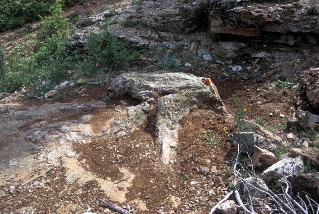 Xilópalos de la base del Pérmico inferior (Rillo de Gallo)