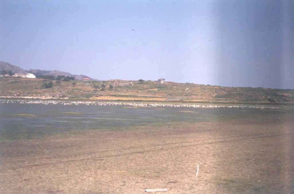 Laguna y rasa en Louro. La laguna en zona de invernada de gran cantidad de especies.