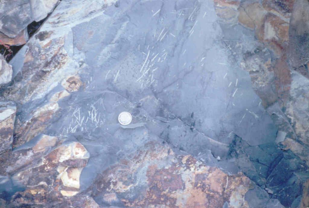 Graptolites (Monograptus), Jaegen los definió como Monograptus deubeli, además aparece Monograptus dubius (foto tomada en 1983)