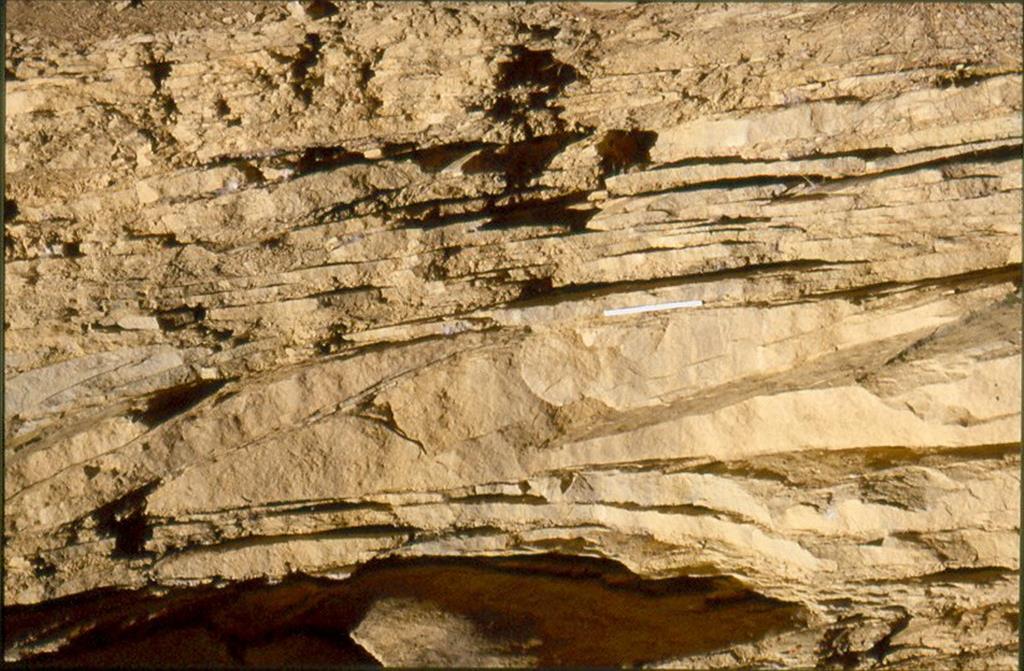 La Règola, extremo S de Cal Viudo. Estratificación sigmoidal, típica de una llanura de marea en la zona más distal, llanura arenosa