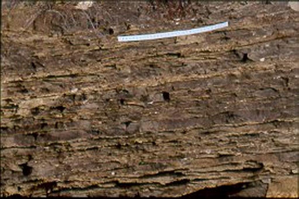 Bar del Manyo. Estratificación lenticular (wavy bedding) típica de una llanura mareal mixta