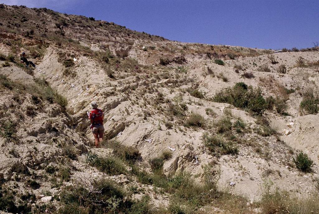 Margas y margocalizas del Cretácico (Maastrichtiense), límite K/T (persona arriba) y Terciario en la parte alta de la loma de Agost