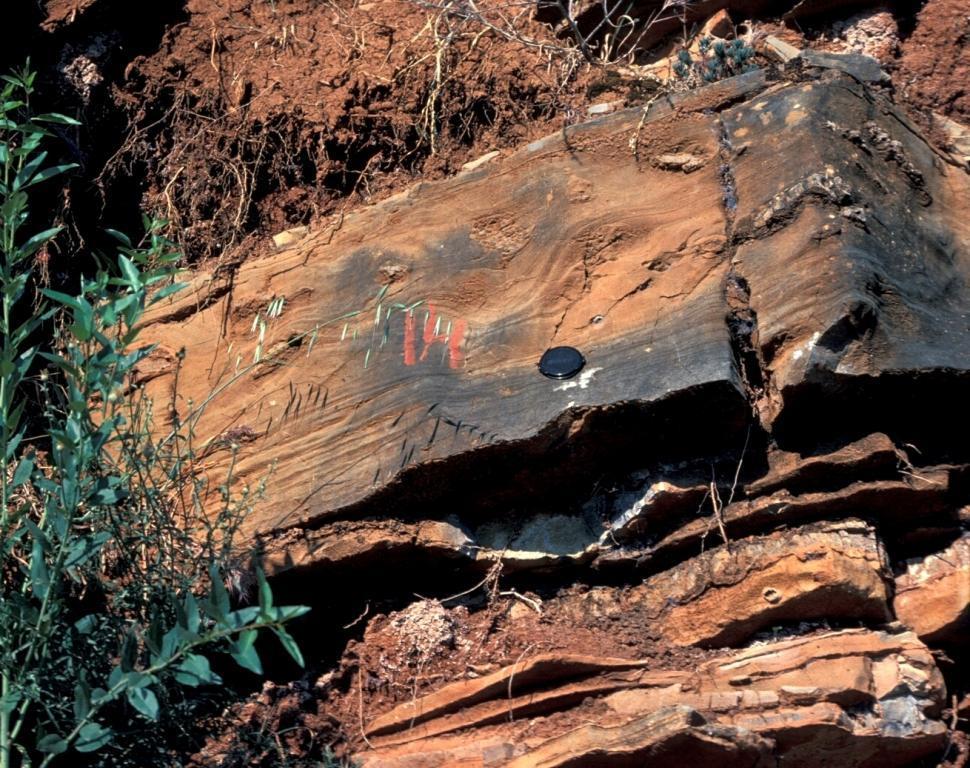 Calcarenita, turbidita calcárea, con secuencia de Bouma Tbcd. Destaca la división c de Bouma con laminación ondulada/convolute muy patente. Sección al este de Jabalcuz en la carretera Jaén-Los Villares.