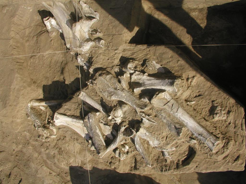 Detalle de la excavación de Fonelas P-1 durante la campaña de 2004 (foto Alfonso Arribas Herrera)