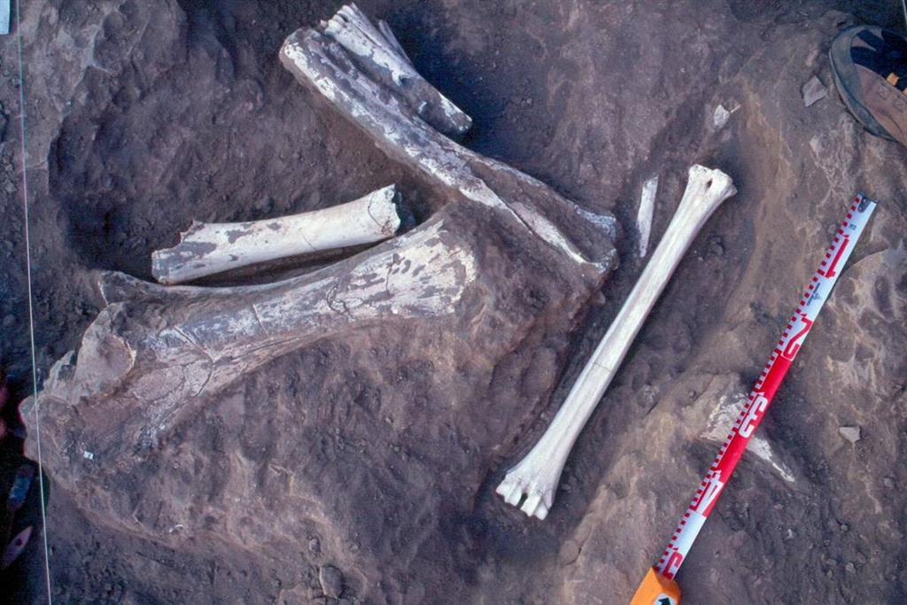Restos óseos de elefántidos y jiráfidos aparecidos en Fonelas P-1 durante la excavación de 2002 (foto Alfonso Arribas Herrera)