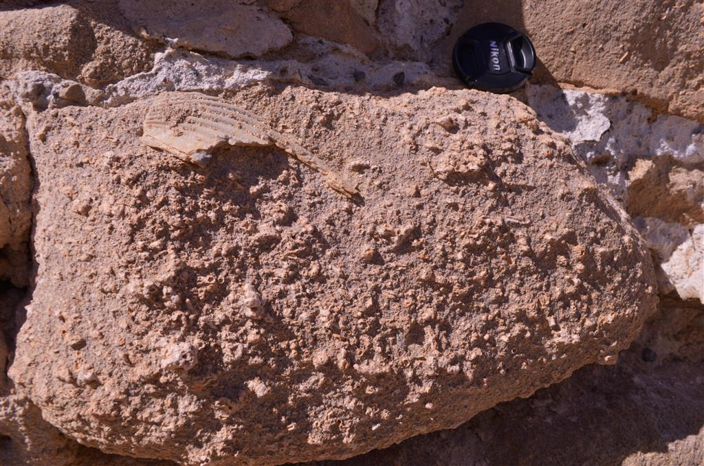 Detalle de las calcarenitas bioclásticas aflorantes en el extremo oeste de la isla. Este material es el que se utilizó para la construcción de los muros de la fortificación