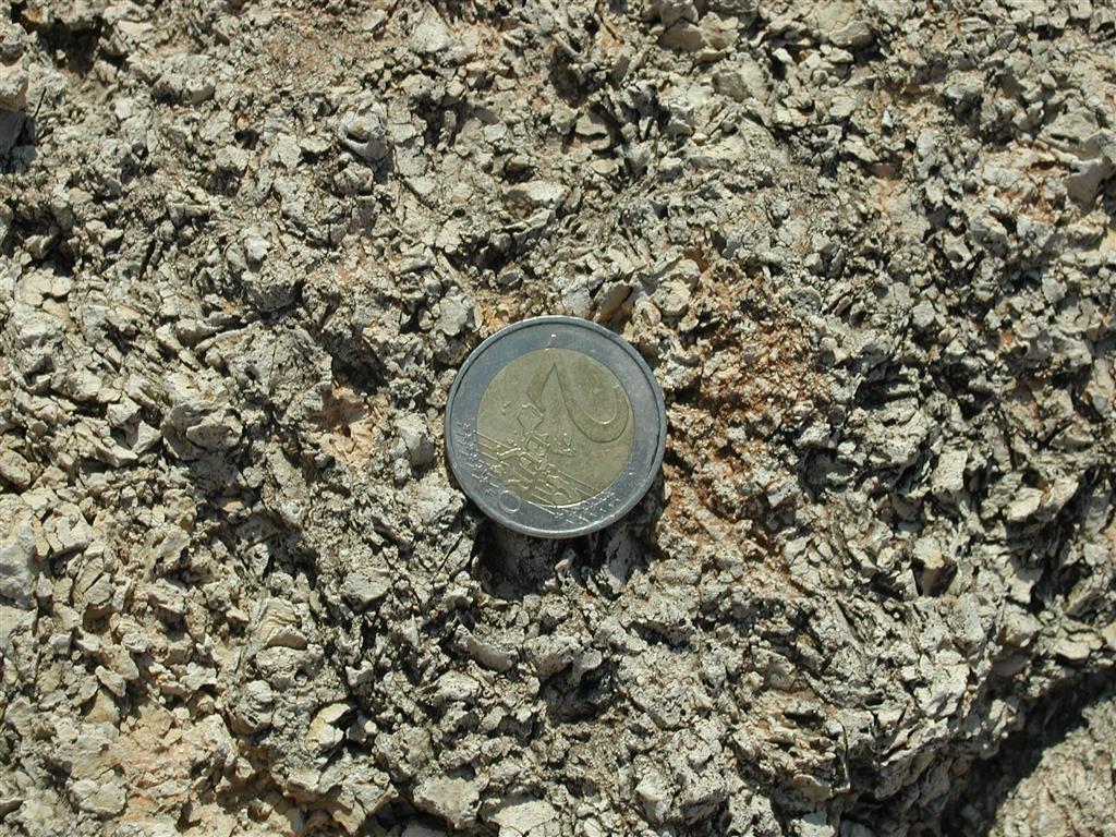 Fragmentos de segmentos de Halimeda en el arrecife de Cariatiz