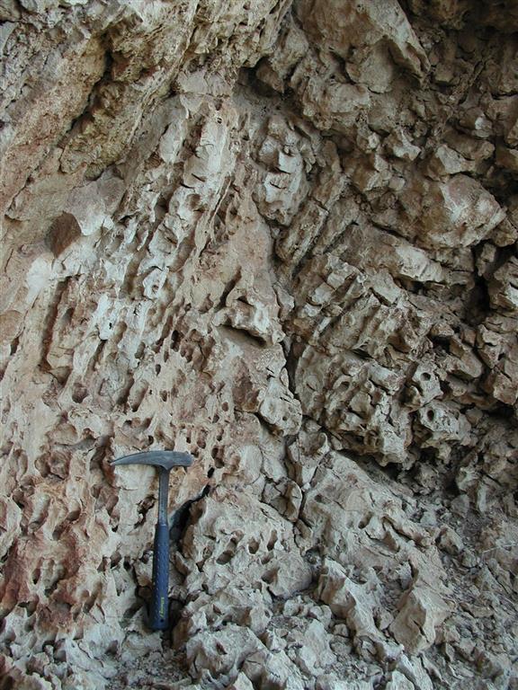 Estructura en pináculos de los Porites en el arrecife de Cariatiz (12: bloque caído; 13 y 14: en posición de vida). Los pináculos constituyen el núcleo del cuerpo arrecifal junto con los estromatolitos, cuya presencia aumenta hacia techo