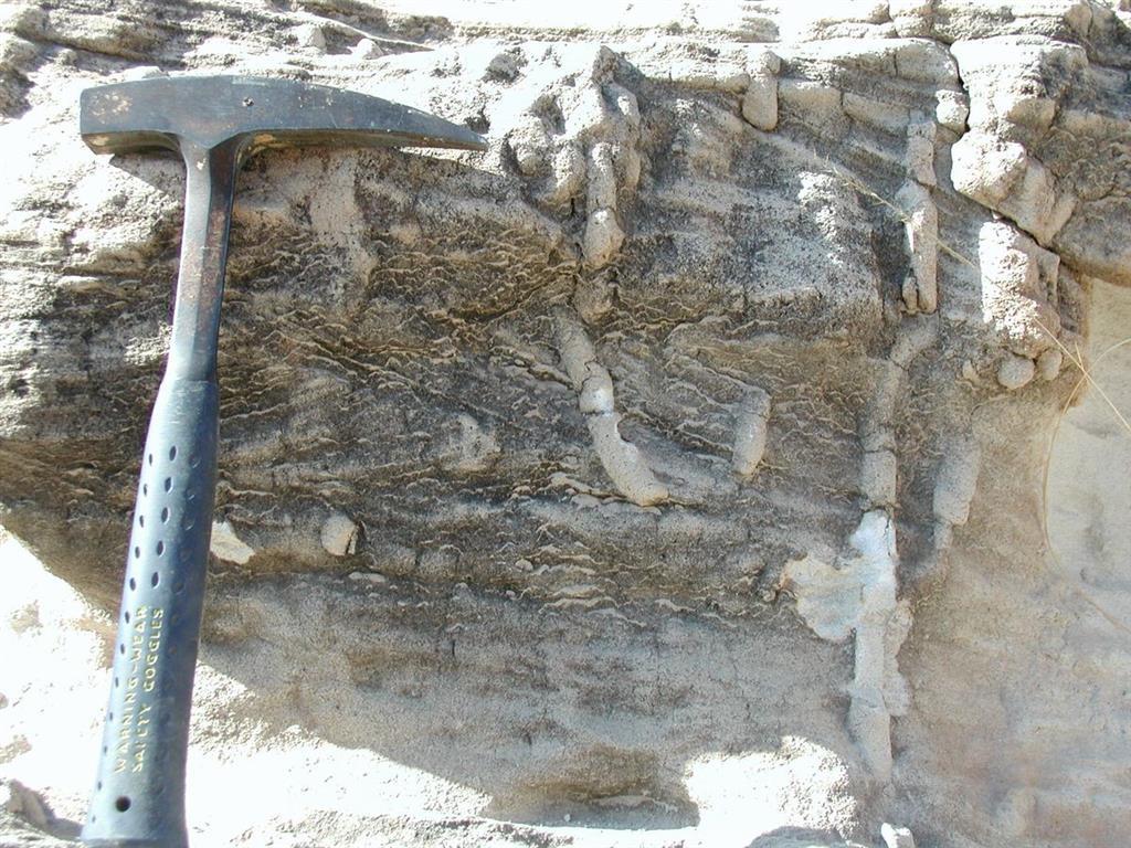 Intensa bioturbación a techo de los estratos de las areniscas de facies playa