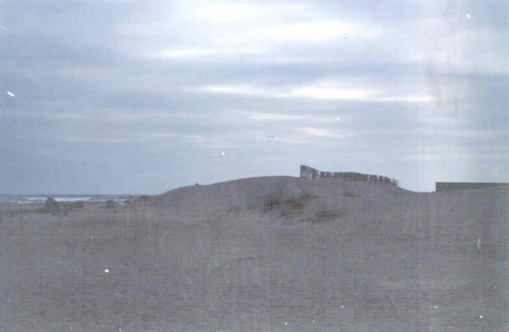 Playa y dunas recientes en la Zona de El Saler.