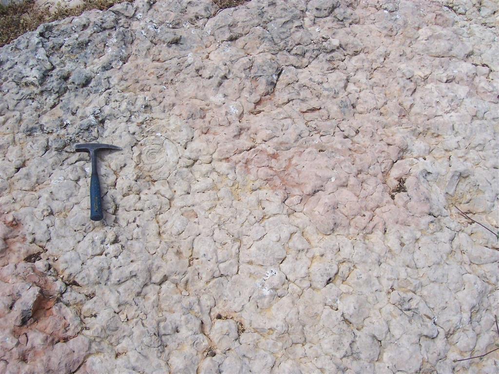 Formación Ammonitico Rosso Superior, afloramiento de la Fuente de los Frailes en la unidad subbética del Camarena-Lanchares. Detalle del techo de un estrato en el que se observan algunos ammonites.