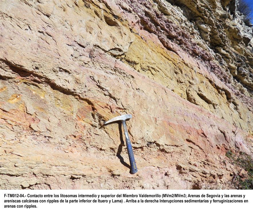 Contacto entre los litosomas intermedio y superior del Mb. Valdemorillo (Mvm2 y 3; Arenas de Segovia y las arenas y areniscas calcáreas con ripples de la parte inferior de Ituero y Lama). Arriba a la derecha interrupciones sedimentarias y ferruginizaciones en arenas con ripples.